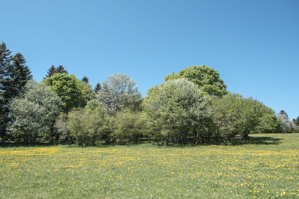 Fruehling im Jura Neuenburg