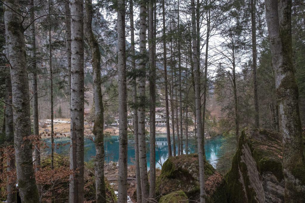 Wald Blausee
