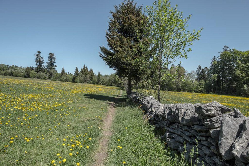 Wanderweg Chaumont Chasseral