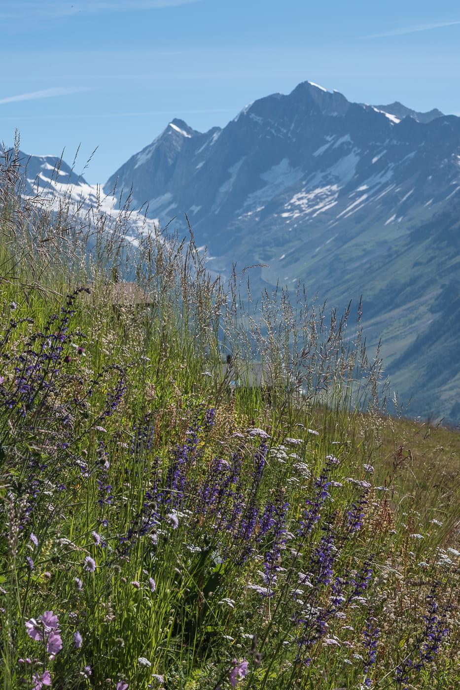 Alpenwiesen Blumen Loetschental