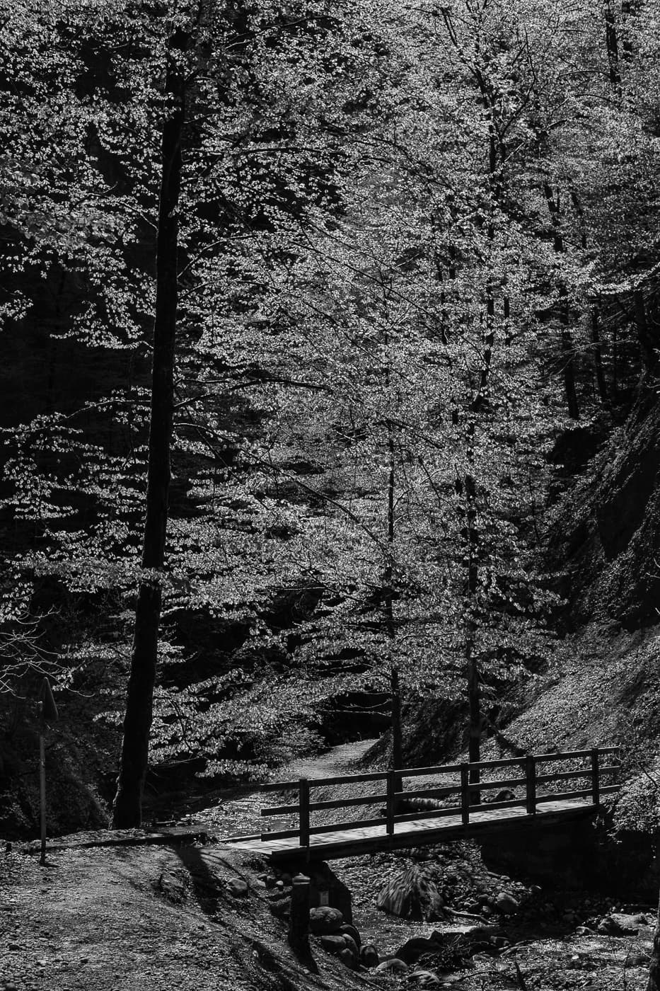 Brücke im Wald (schwarzweiss)