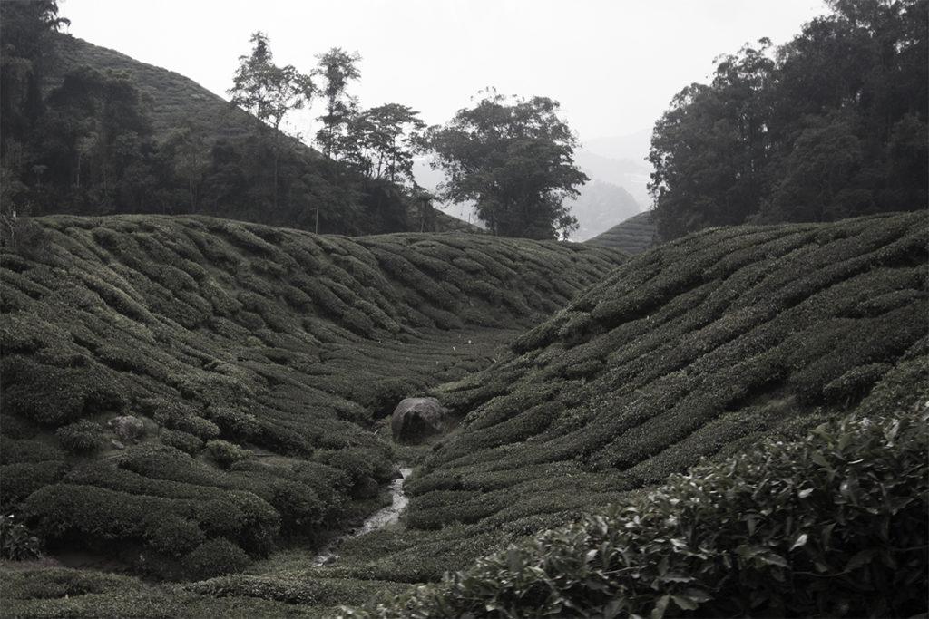 Bach durch Teeplantage