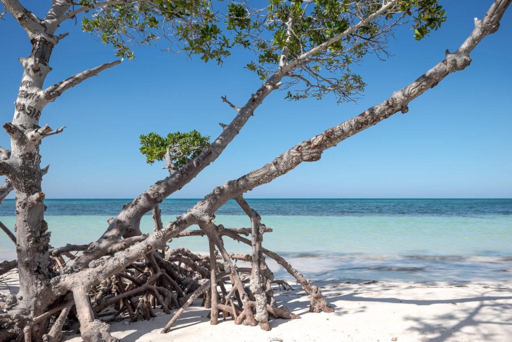 Cayo Jutias Paradies