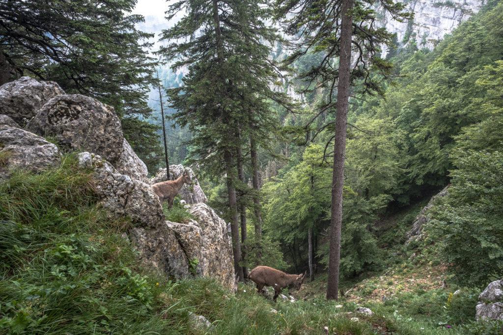 Fauna & Flora am Creux du Van