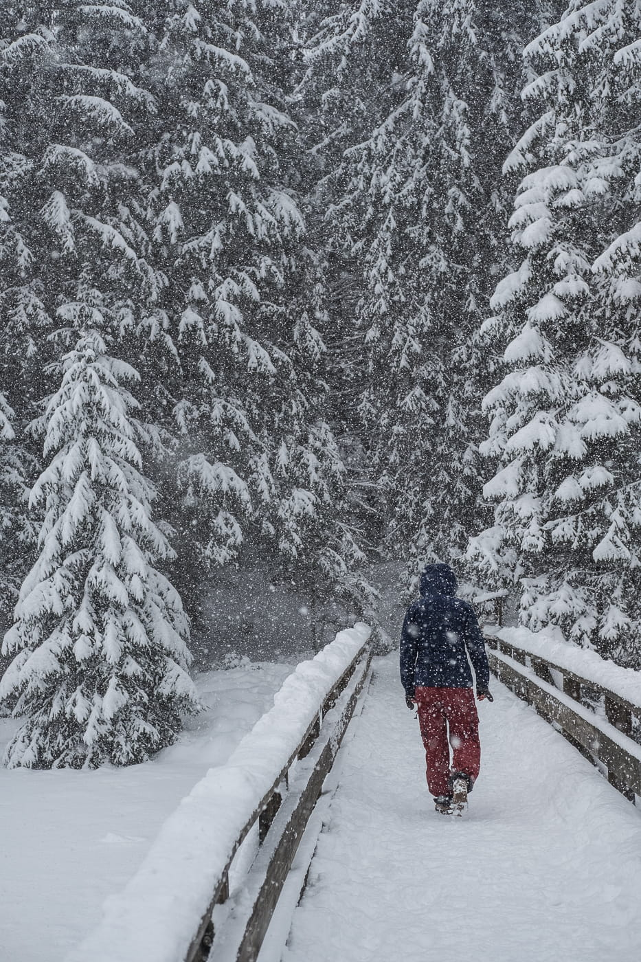 Dichter Schneefall im Jura