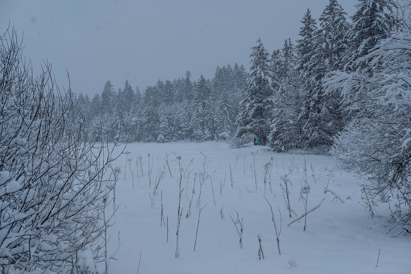 Etang de la Gruere im Winter