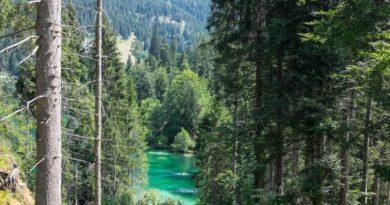 Spaziergang im Flimserwald