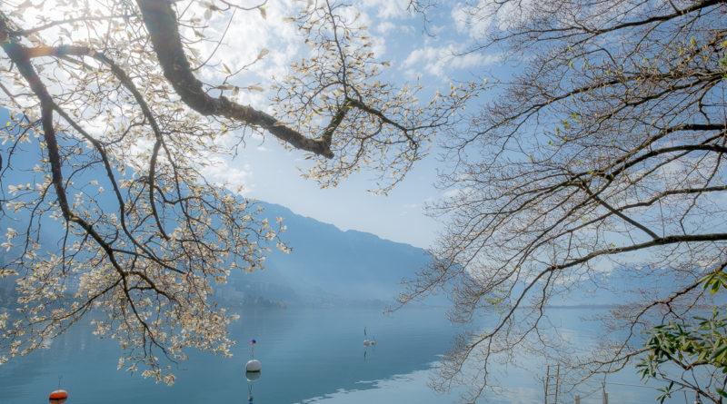 Frühlingsspaziergang am Genfersee