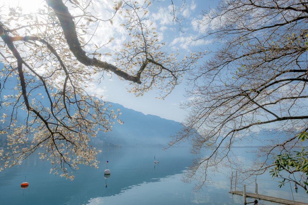 Frühlingsspaziergang Genfersee