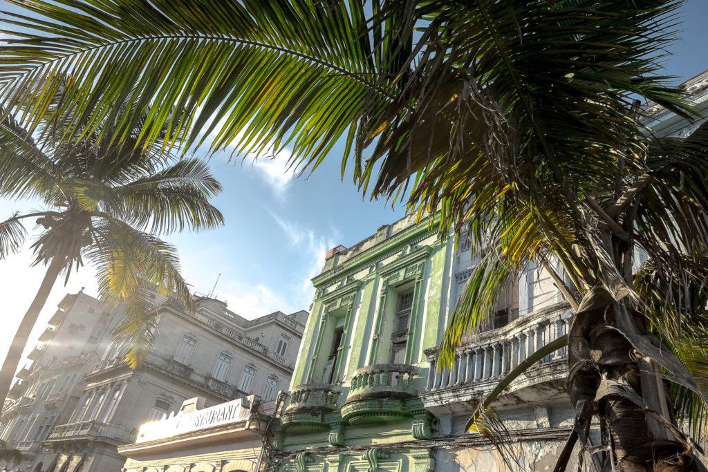 Havanna Palmen
