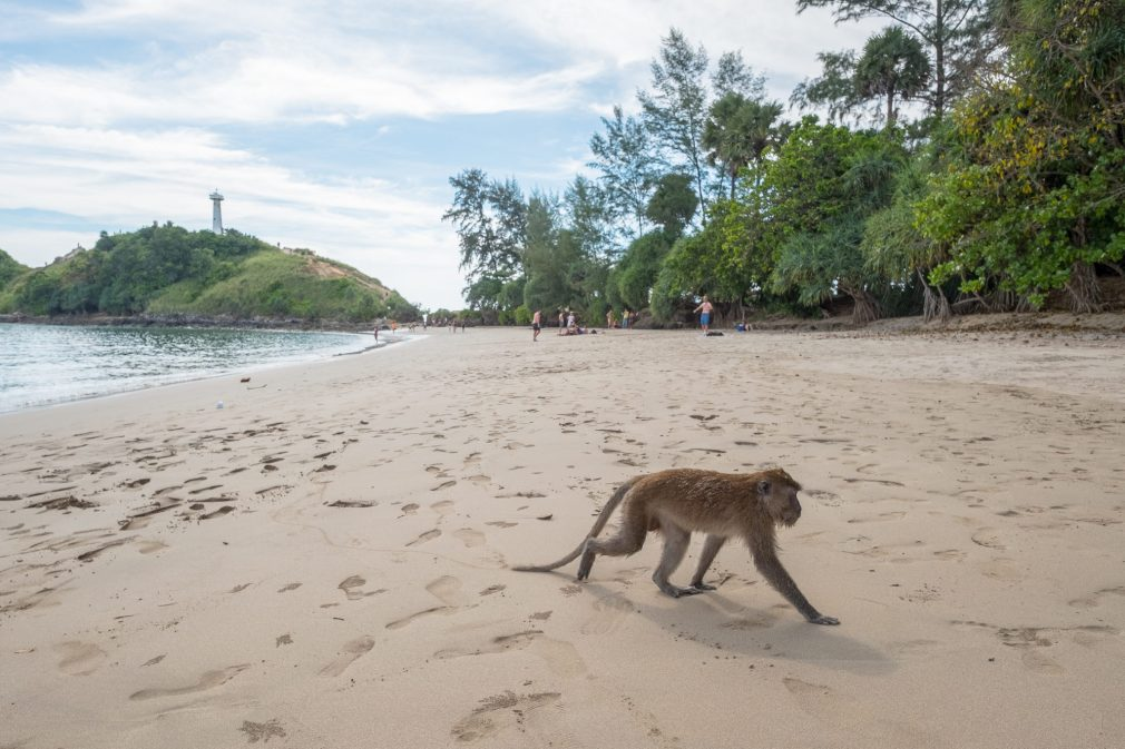 Freche Affen im Nationalpark Koh Lanta