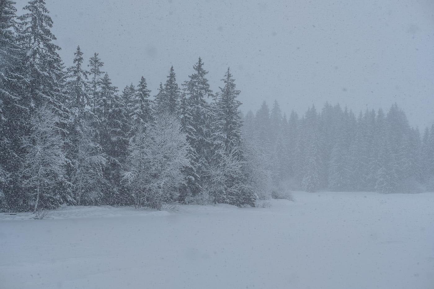 Moorsee im Schnee