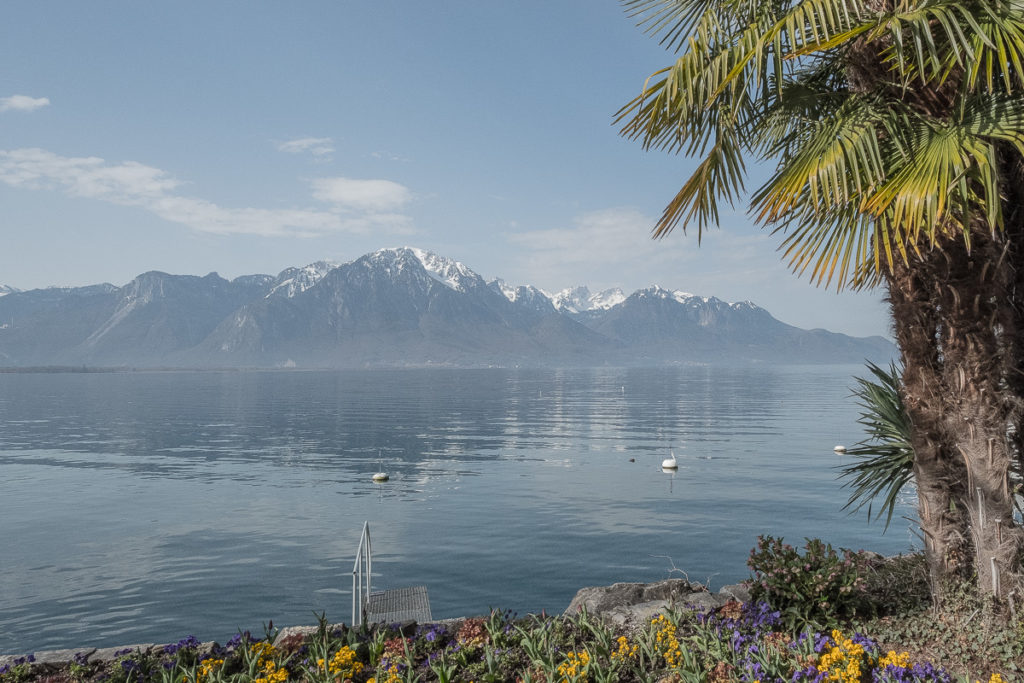 Palmen Berge See Schweiz