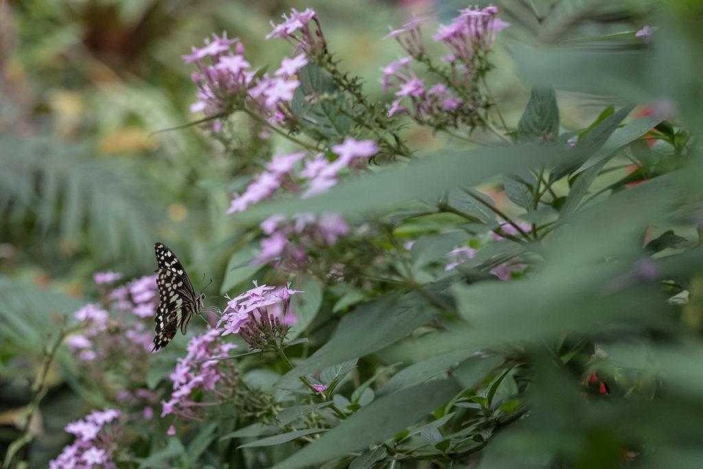 papillion papiliorama