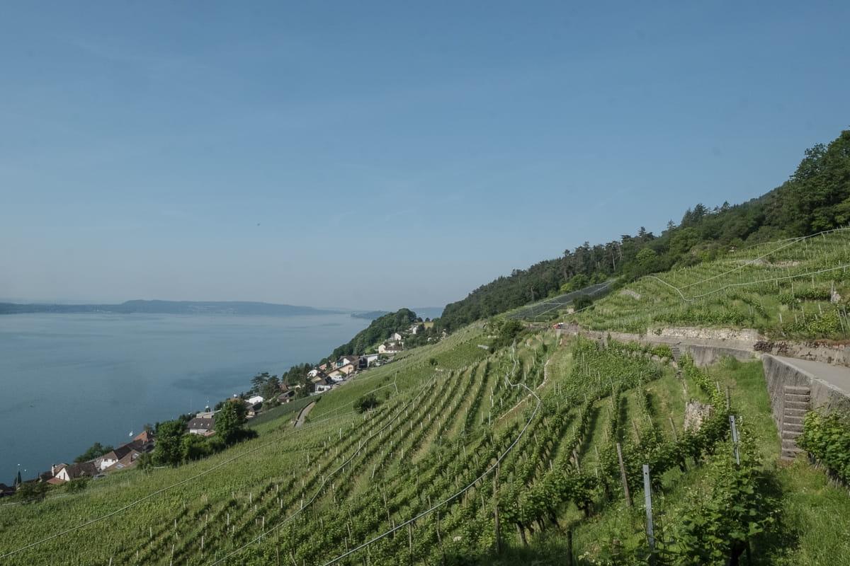 Rebberge im Berner Seeland