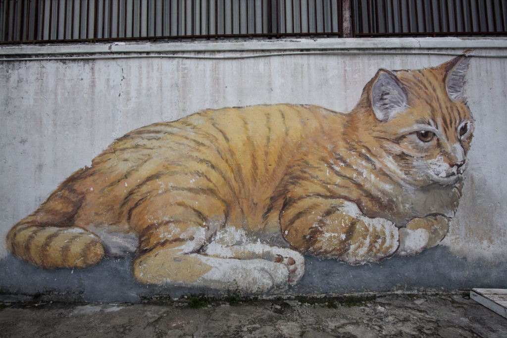 Catcontent in Malaysia