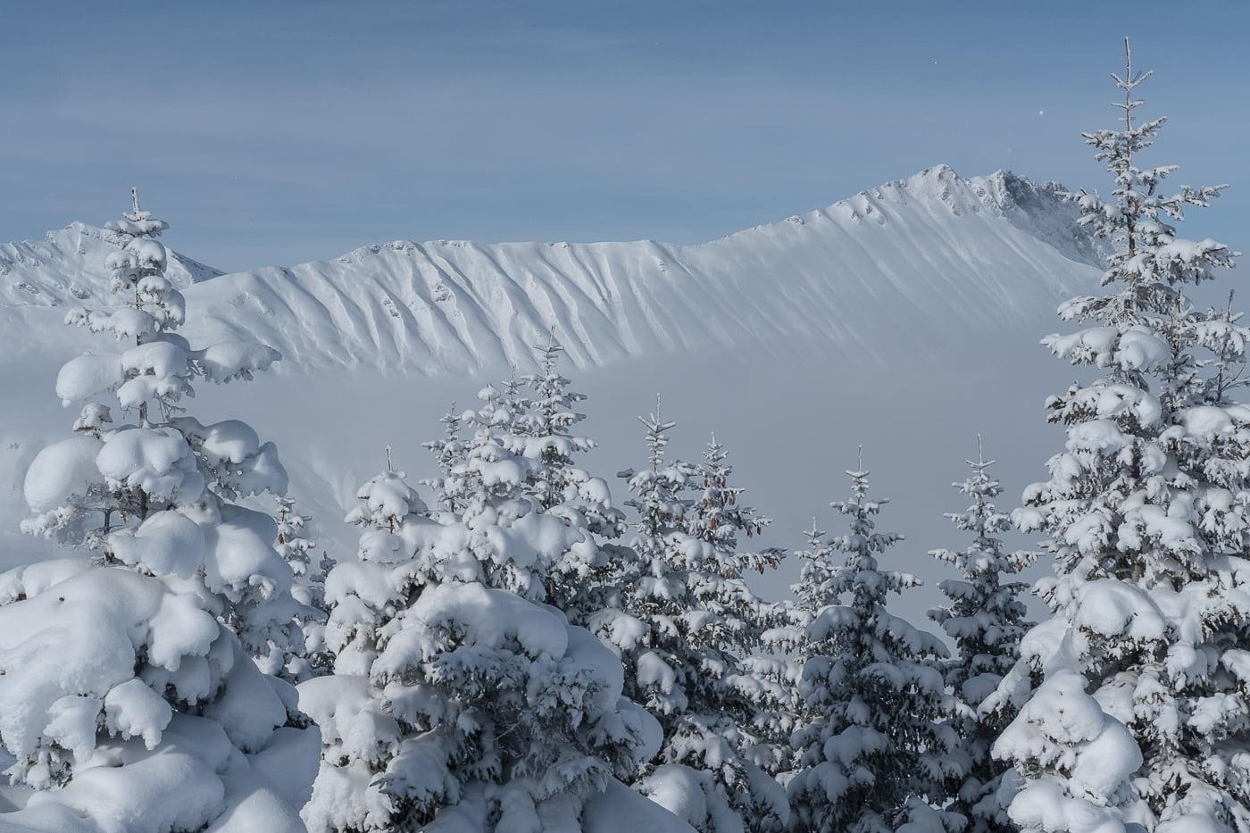 Schnee auf den Tannen
