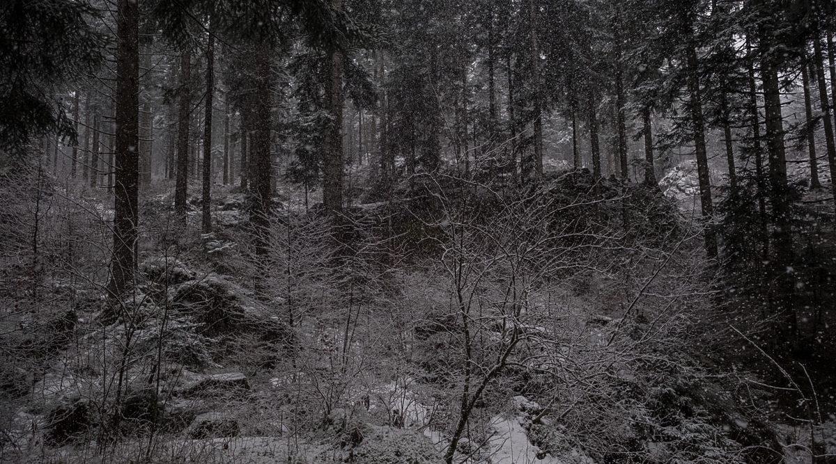 verschneiter-flimserwald