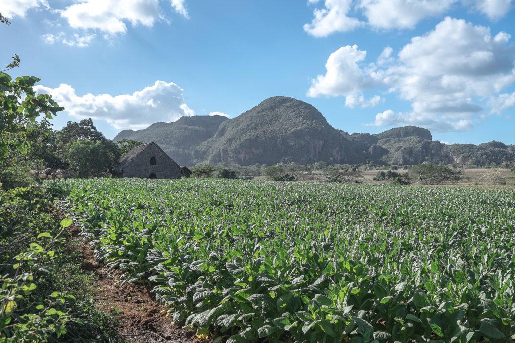 Vinales Tabakplantage