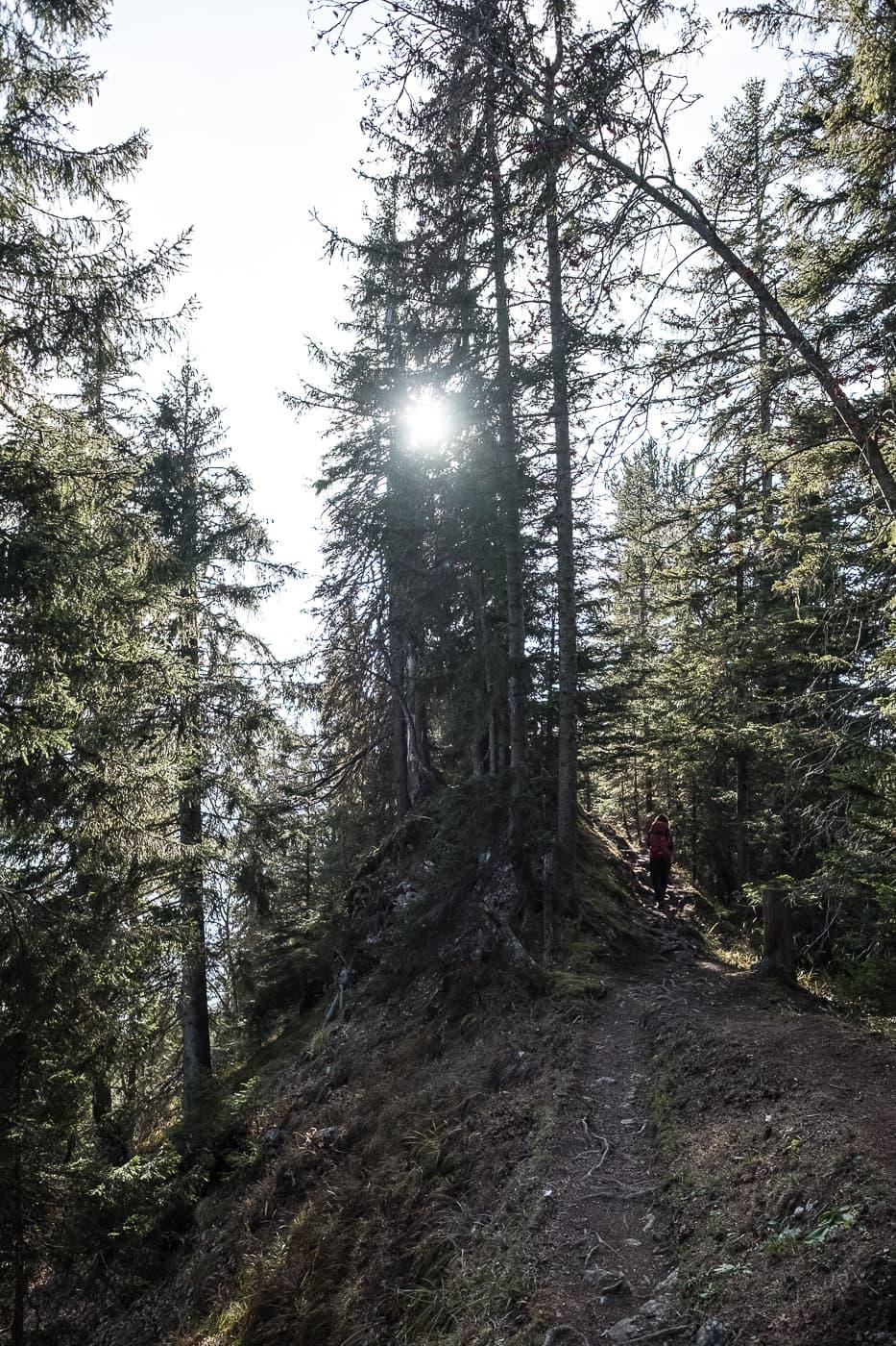 Wald zum Hardergrat