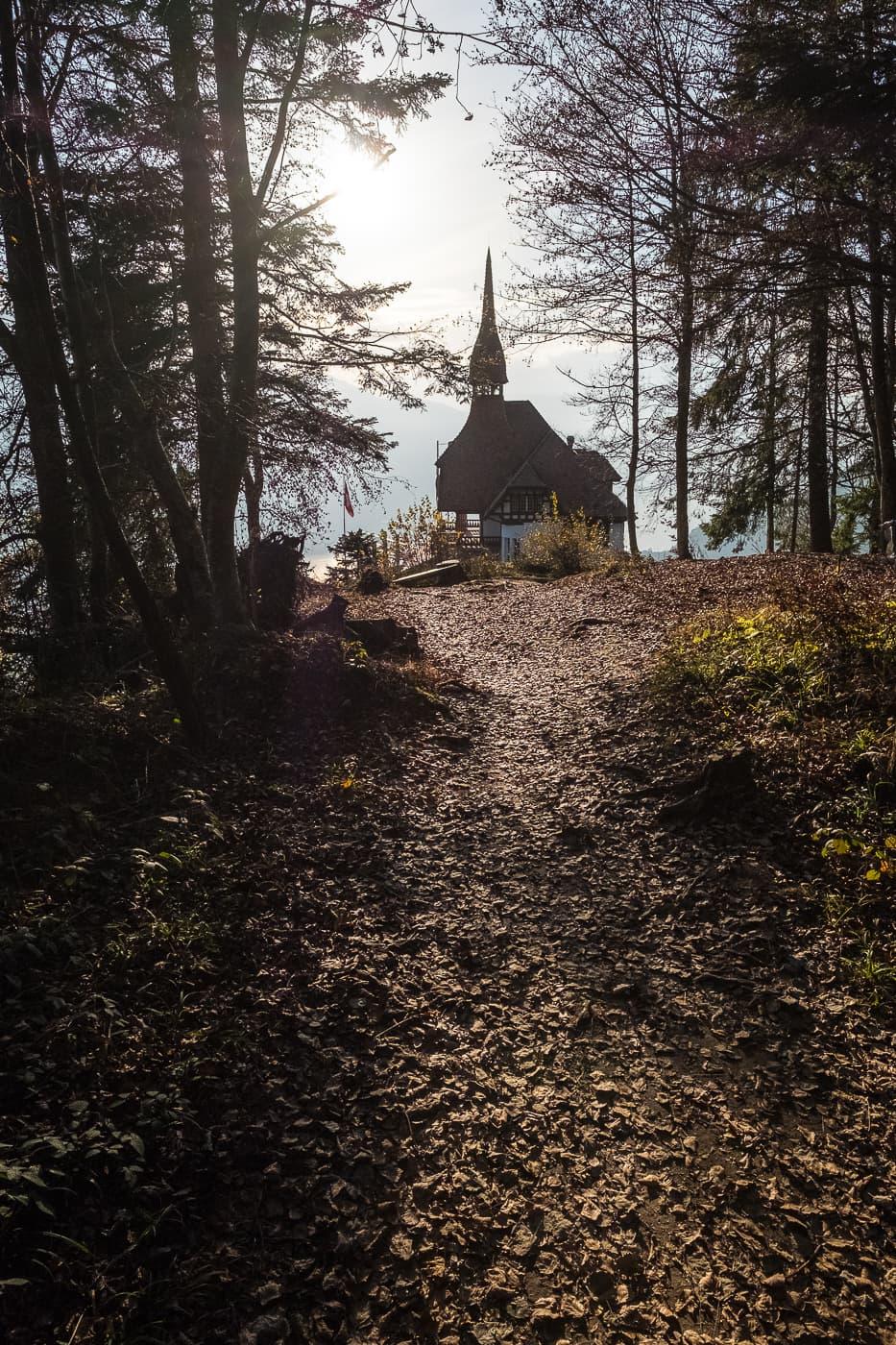 Waldspaziergang oberhalb Restaurant Harder Kulm