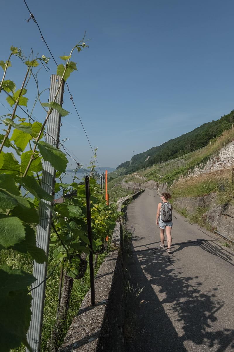 Wanderung auf dem Rebenweg am Bielersee