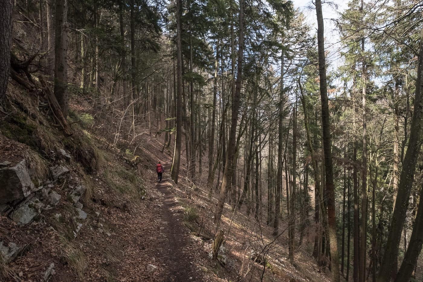 Wuesthöchi Wanderung durch Wald