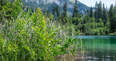 Im sommerlichen Flimserwald: Caumasee & Crestasee